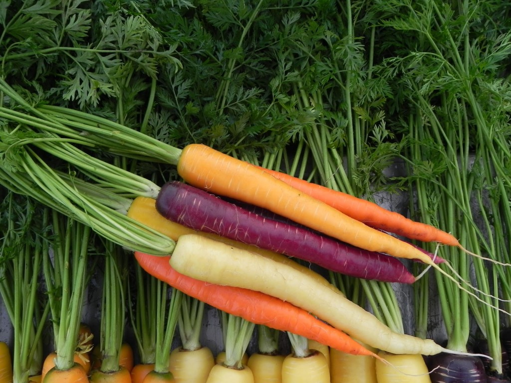 Carrots are some of the most powerfully healing of the edible plants.