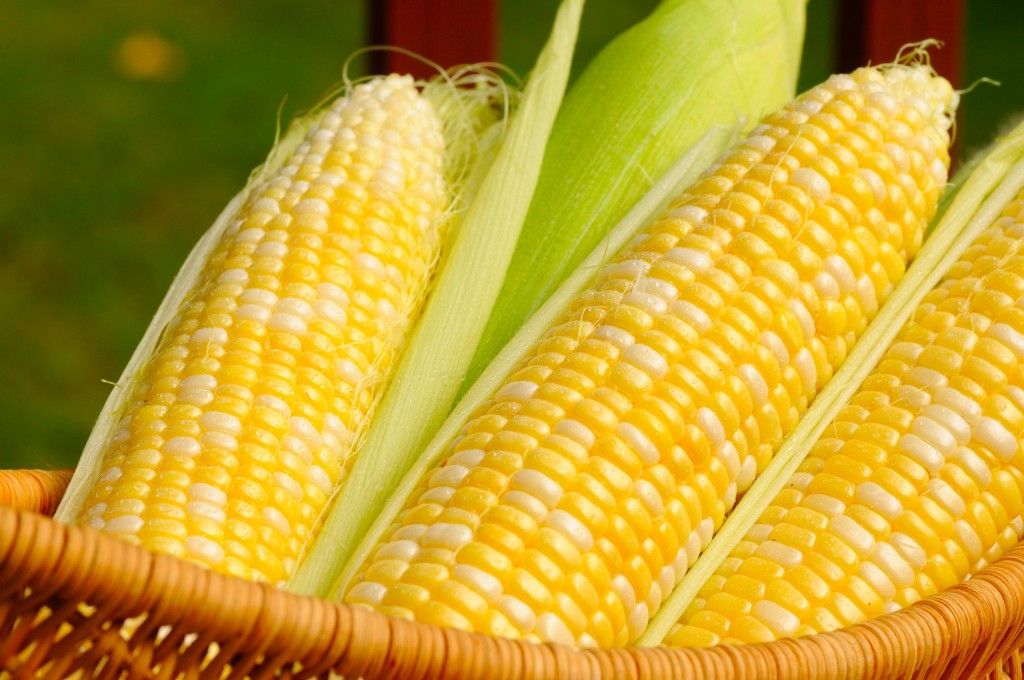A basket of sweet corn, three ears partially husked ©FOTOLIA/KENNETH SPONSLER