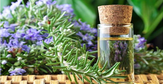 Rosemary and rosemary essential oil for increasing memory.