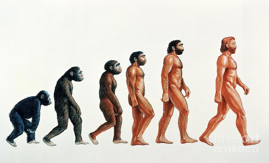 Human Evolution by David Gifford