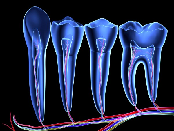 Flexible. Nerve cells sometimes spontaneously transform into stem cells inside teeth, researchers have discovered. PASIEKA/SCIENCE PHOTO LIBRARY/CORBIS